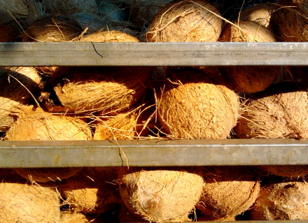Coconut cage