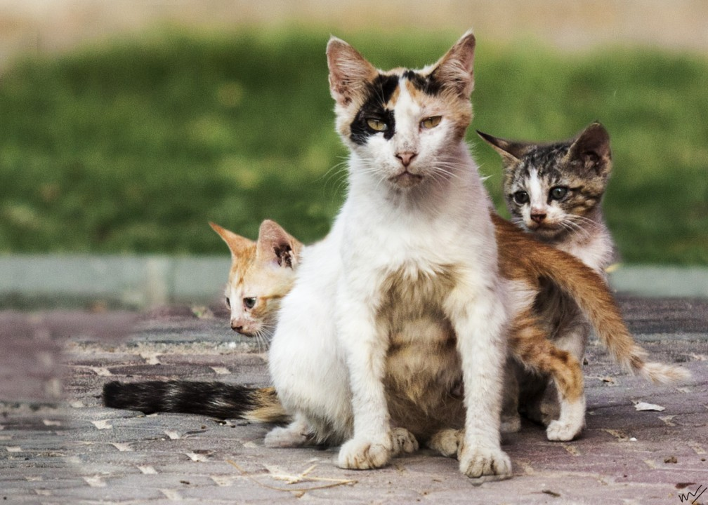 stray cat family