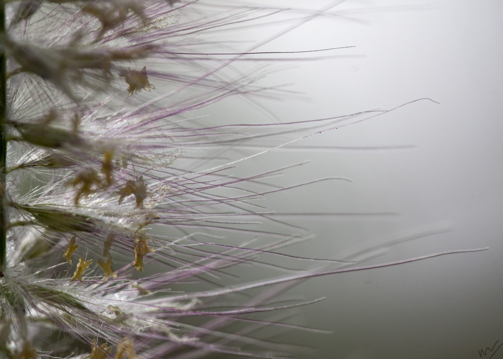 fur flower2