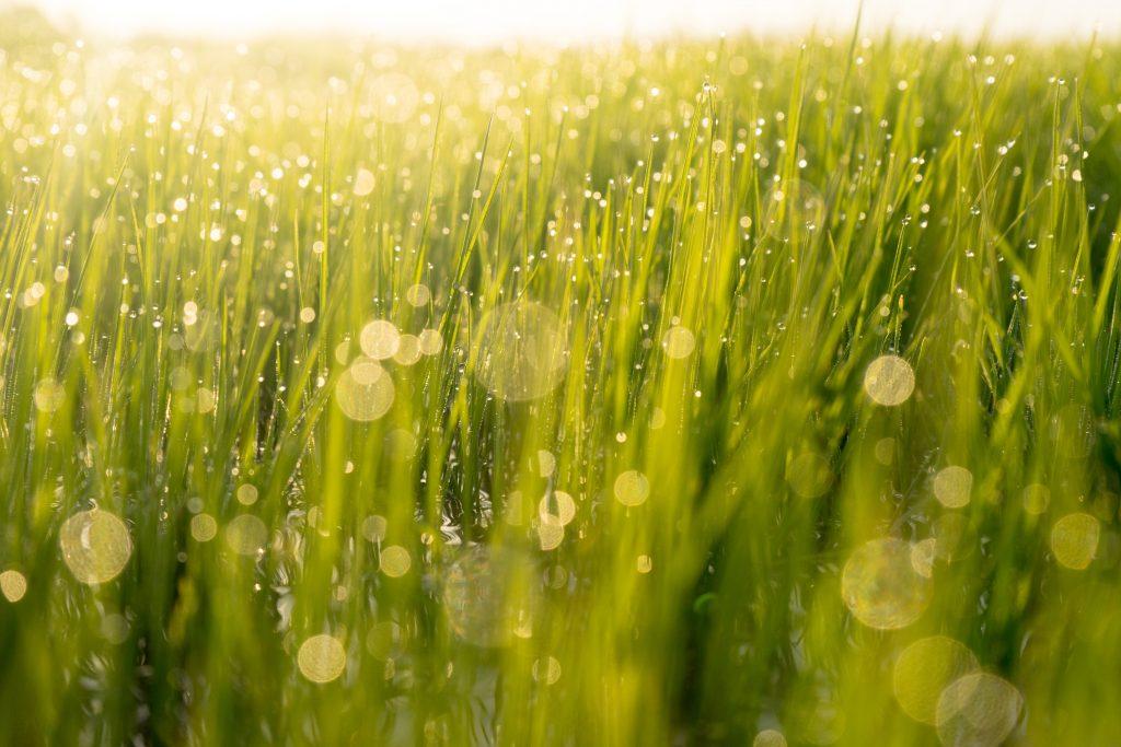 Dew drop and bokeh