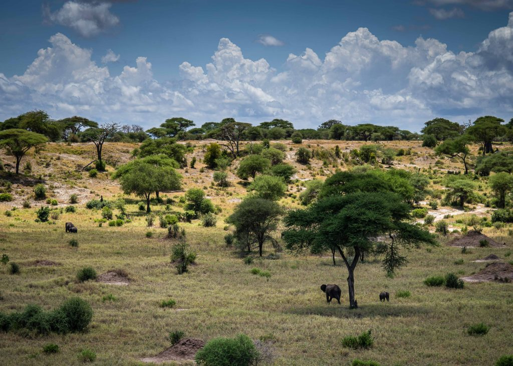 Tarangire national park view with elephants at a distance