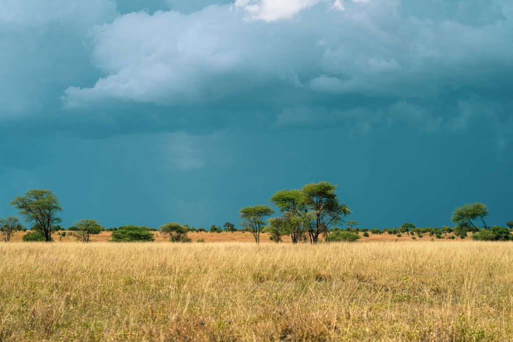 Cloudy day in the african grassland